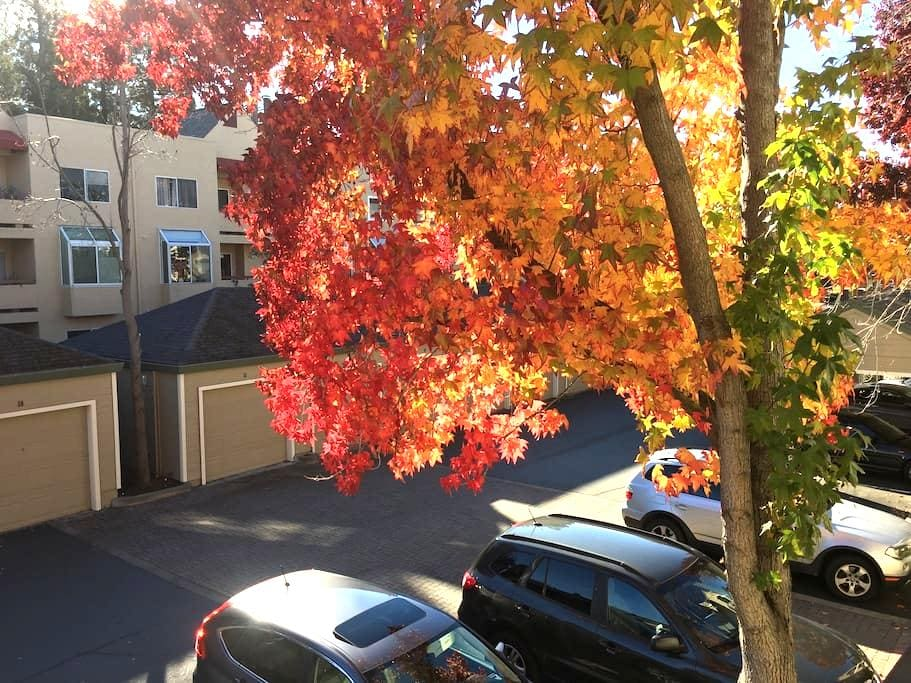 Cozy private room with own bathroom - Walnut Creek - Daire
