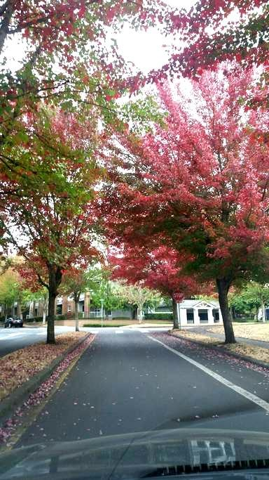 Room for 1 in a peaceful and lovely apartment - Wilsonville - Apartamento