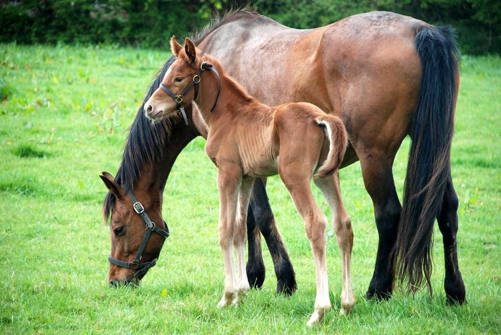 Gîte Campagne - Elevage de chevaux, 10 k de la mer - Catteville - Ev