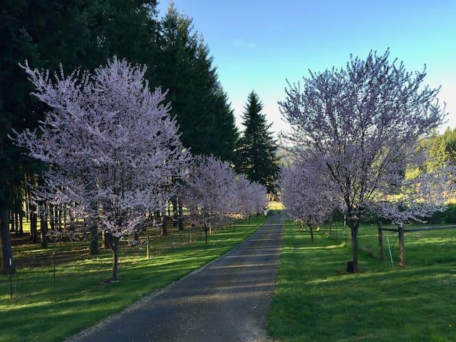 Arbor Grove Country Cottage - Newberg - Huoneisto
