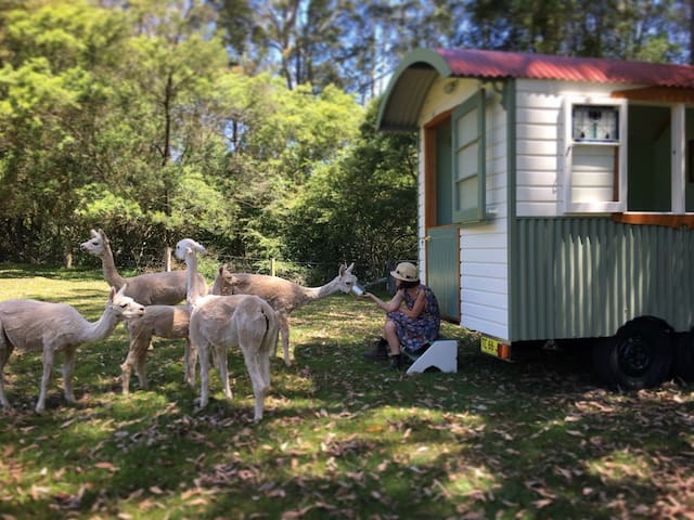 Shepherds Hut Farmstay: glamping on alpaca farm - Laguna - Stråhytte