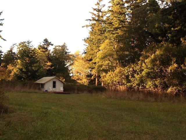 Sweet yurt in pastoral meadow - Lopez Island