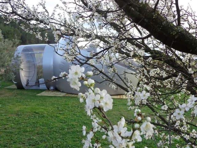 Les chambres bulle du château belvize - bize Minervois  - Overig