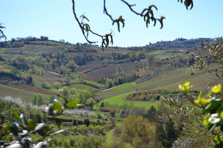 Quiete tra le colline a 20 minuti dal mare - Longiano - Ev