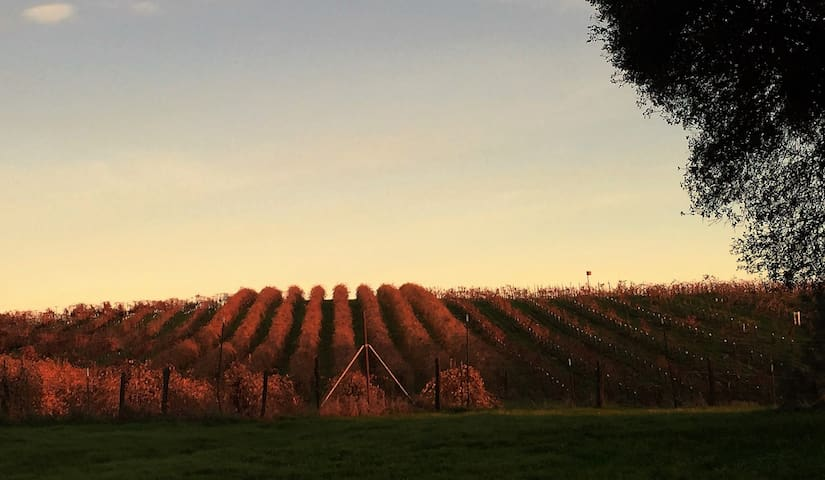 NEW LISTING: Heart of Wine Country - Plymouth - Ev