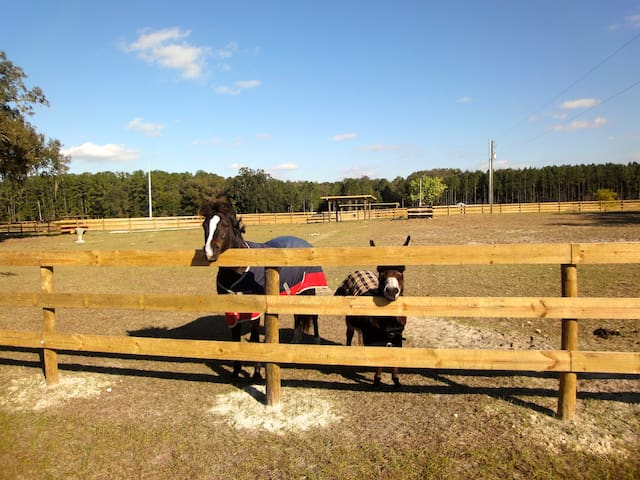 Horse Farm #1 HITS, Devils Den, Blue Grotto, Ocala - Williston - Casa