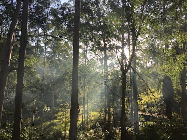 Floury Baker - Laguna - Laguna - Natur lodge