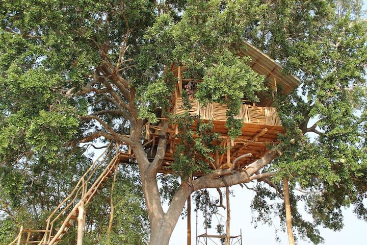 Yala Dream Park Best Treehouse and Campingsite - Hambantota
