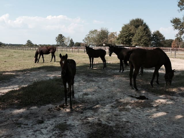 The Mare's Lair~~Country Cottage - Franklinton - Huis