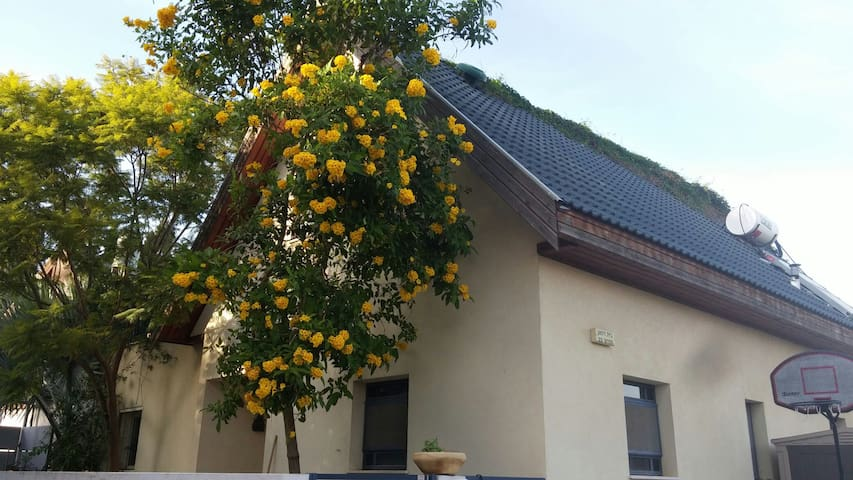 The Clementine tree house - Gedera - Maison