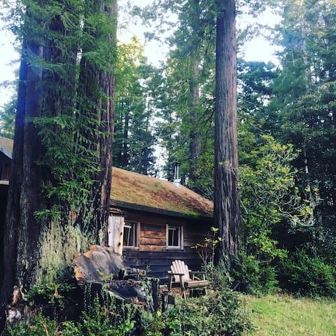 Cabin in Redwoods at Ocean! - Albion