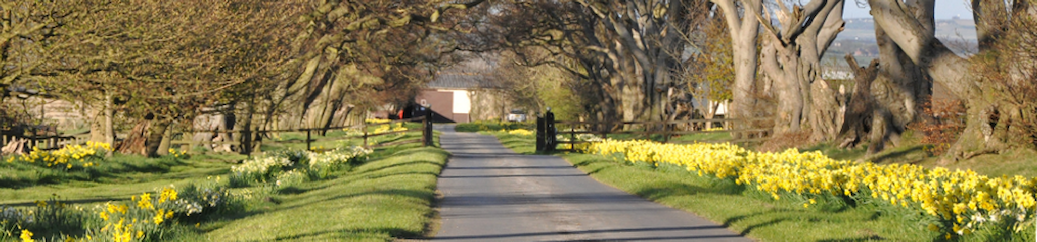 Ivesley Equestrian Centre - Durham - Bed & Breakfast