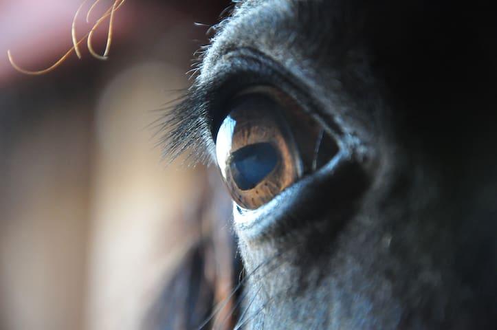 Bydlení na farmě u koní v Beskydech - Třanovice - Huis