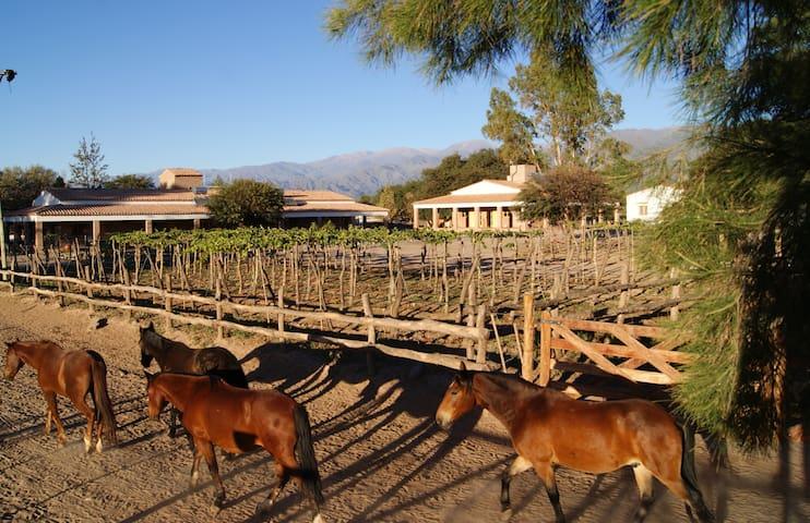 La Vaca Tranquila - Cafayate - San Carlos - Pousada