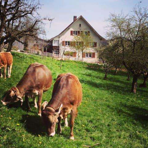 """Gemütliches Doppelzimmer """"Kornfeld"""" - Schneisingen - Bed & Breakfast"""