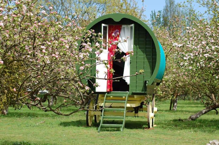 Bouncers Farm Campsite - Witham - 其它