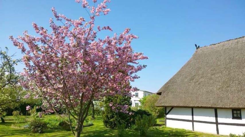 Ferienwohnung auf ehemaligem Hof - Börgerende-Rethwisch - Leilighet