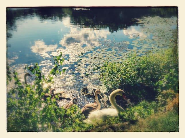 Hidden Cove on the Lake with breakfast! - 프래밍햄(Framingham) - B&B