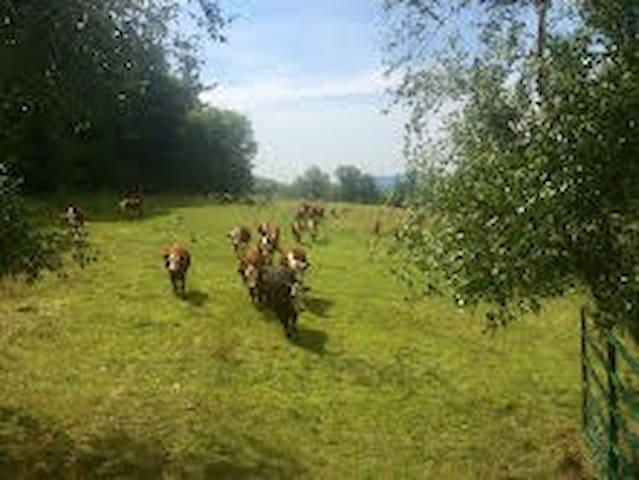 Equestrian Haven at Sentinel Farms - Starksboro - Bed & Breakfast