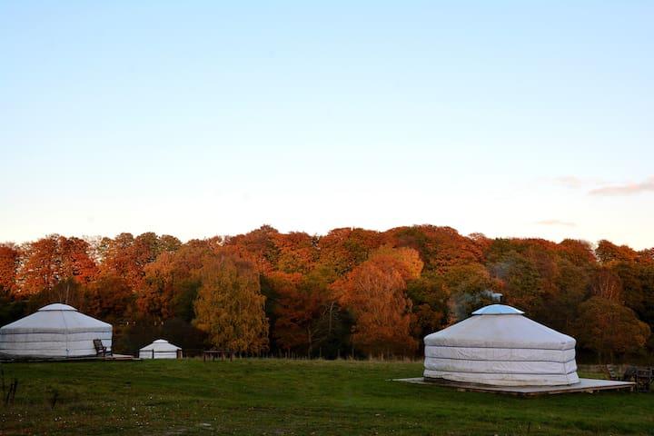 Authentic Mongolian yurt just outside Lund/Malmö - Lund NO - Yurta