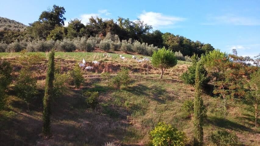 Tra arte e natura - Art and nature - Castelfiorentino - Huoneisto