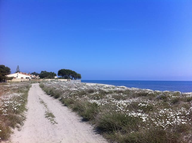 Joli chalet bord de mer climatisé - Lucciana - Chalet