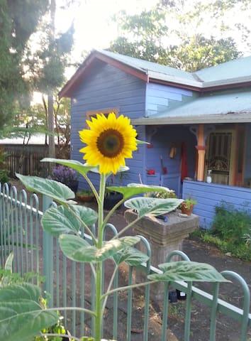 The (bright) Blue House: Lismore - Lismore - Hus