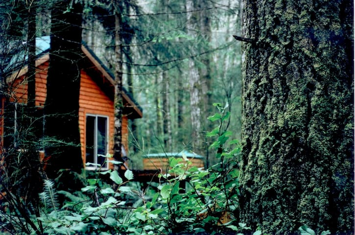 Big Tree Cottage- Quadra Island, BC - Quadra Island, BC Canada - Stuga