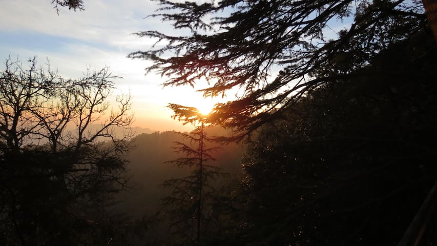 Cedar Tree B&B - Shimla - Bed & Breakfast