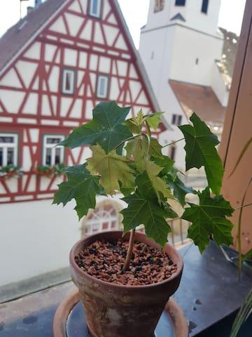 Wunderschöne Maisonettwohnung im Fachwerkhaus - Erligheim - Kondominium