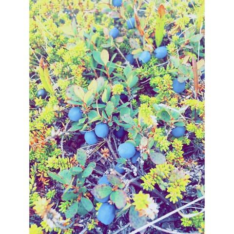 Bjork & Bjork - Mosfellsbær