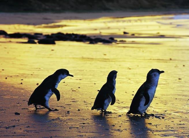Phillip Island Bass Coast Victoria - Wonthaggi