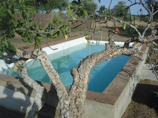Restored Farm House on Olive Grove - Alvito Municipality - Huis