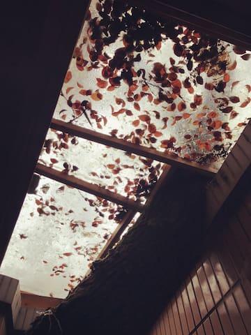 树屋:孤独花园 - Changsha - Talo