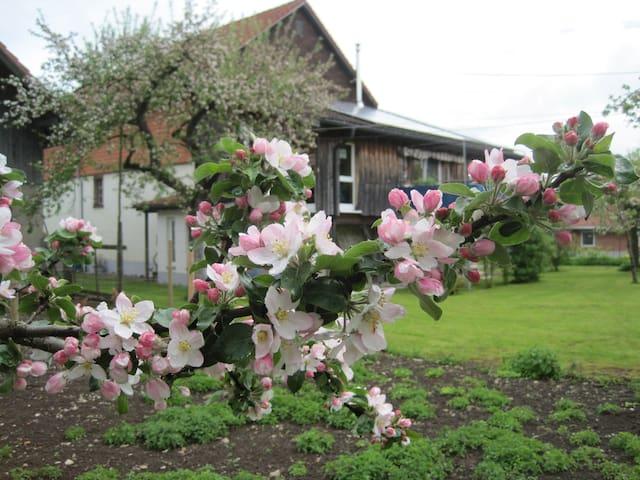 renoviertes altes Bauernhaus - Wutach - Dom