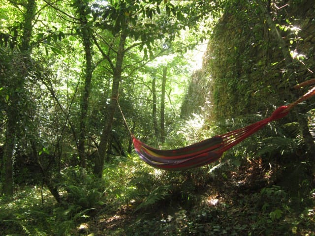 Immerse in Wild Nature at Awakened Forest Project - Benfeita - Daire