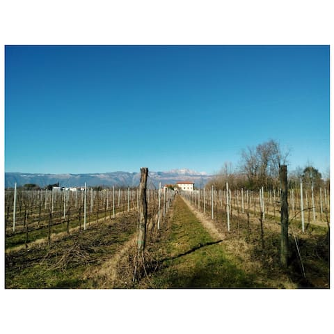 Beautiful place in the middle of vineyard - Pordenone - Talo