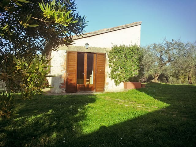 Scenic cottage among olive groves - Capalbio - Hus