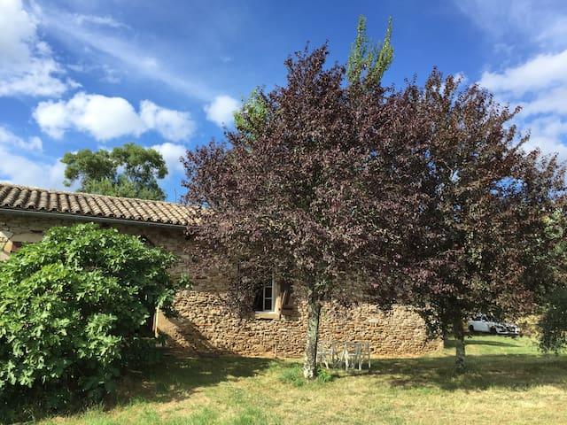 Maison proche Cordes sur Ciel - Saint-Marcel-Campes - Dom