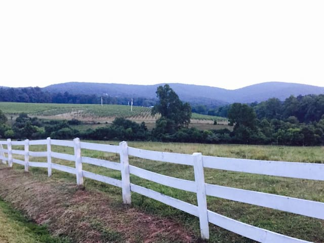 Vineyard Country Guesthouse - Barboursville