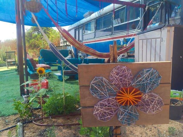 Magical bus near beach - Rishpon - Leilighet