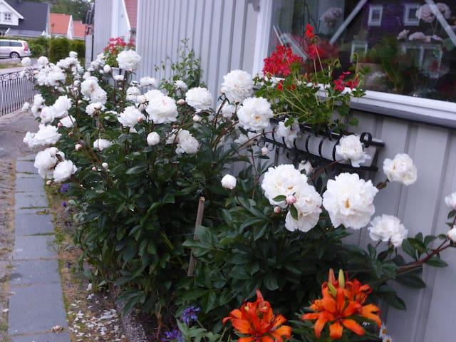 Solvikveien på Gressvik - Fredrikstad