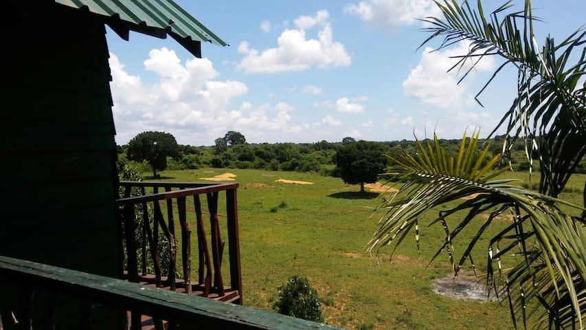 Safari Tree House. - tissamaharama.yala.