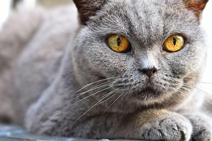 100y/old house, Cats&Meditation, 瞑想道場 空雲古舎 -  Osaka city - Ev