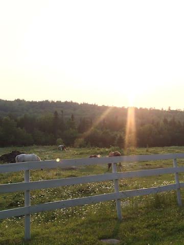 Cedar Swamp Farm - Brooks - Huis