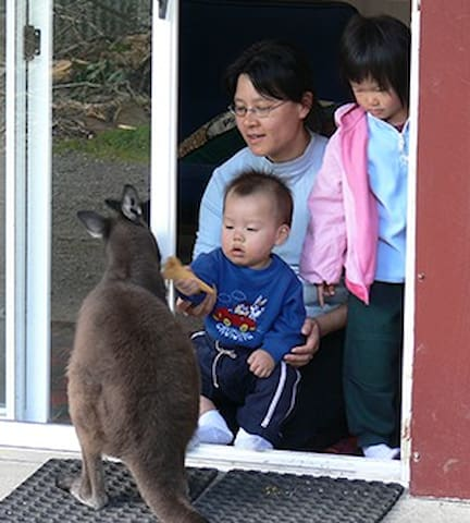 Kangaroo Unit: Fauna Australia - Lavers Hill