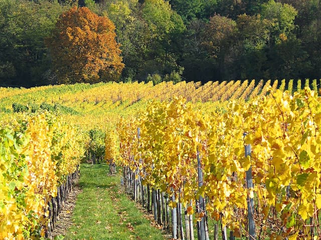 Appart 3p sur la route des vins, proximité Vosges - Mutzig - Appartement