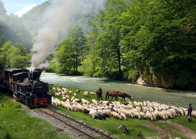 Cosy Transylvanian Home  - Săcel - Bed & Breakfast