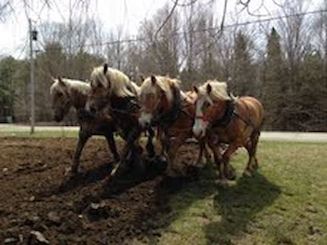 Horses Pulling Farmstay - Thorndike - Hus