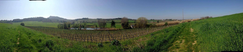 Casa I Picchi - stunning view on Bertinoro - Bertinoro - Casa